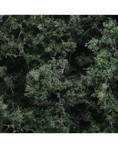 Løvtrær, , WODF1130