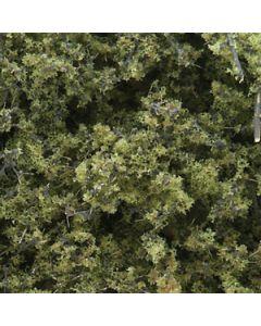 Løvtrær, , WODF1132
