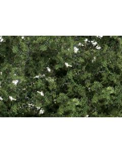 Løvtrær, , WODF1131