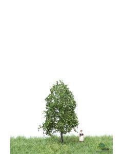 Løvtrær, , MBR51-2101