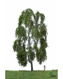 Løvtrær, , MBR51-2401