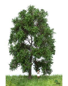 Løvtrær, , MBR51-2302