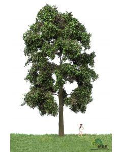 Løvtrær, , MBR51-2402