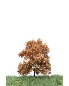 Løvtrær, , MBR52-2102