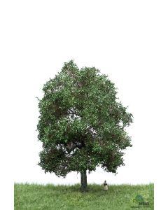 Løvtrær, , MBR51-2303