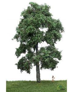 Løvtrær, , MBR51-2403
