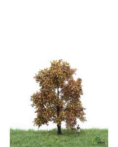 Løvtrær, , MBR52-2203
