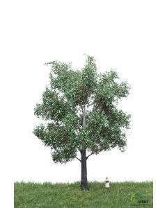 Løvtrær, , MBR51-2305