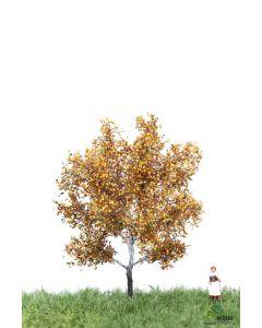 Løvtrær, , MBR52-2105