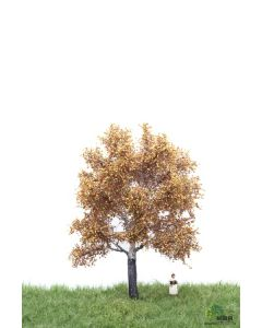 Løvtrær, , MBR52-2205