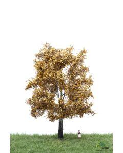 Løvtrær, , MBR52-2305
