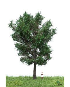 Løvtrær, , MBR51-2306