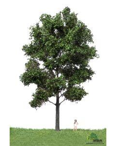 Løvtrær, , MBR51-2406