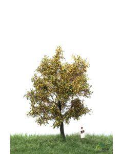 Løvtrær, , MBR52-2206