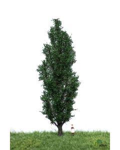 Løvtrær, , MBR51-2307