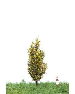 Løvtrær, , MBR52-2107