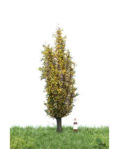 Løvtrær, , MBR52-2207