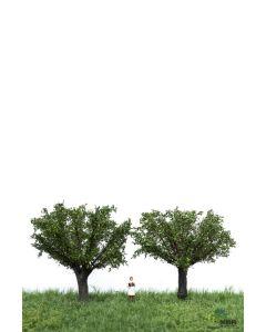 Løvtrær, , MBR51-2308