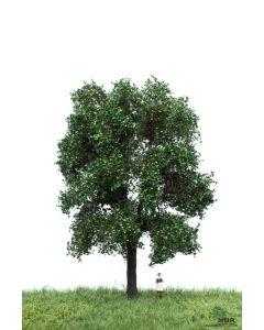 Løvtrær, , MBR51-2310