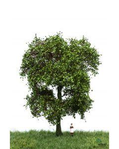 Løvtrær, , MBR51-2312