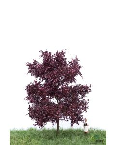 Løvtrær, , MBR51-2114