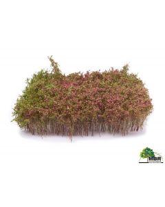 Busker, MBR-Model-50-5007-shrubbery-blooming-violett, MBR50-5007
