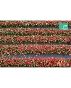 Blomster og planter, Blomsterstriper, Rød, Stor Pakke, MIN731-23