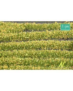 Blomster og planter, Blomsterstriper, Gule, Stor Pakke, MIN731-22