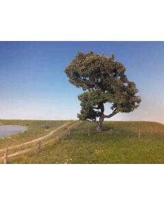 Løvtrær, Bøk ,1 Stk stor, Sommer, MIN220-22
