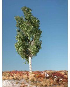 Løvtrær, Osp, Stor Sommer, MIN215-22