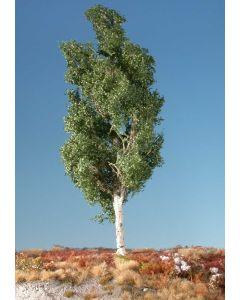 Løvtrær, Osp, Stor Sommer 1 Stk, MIN215-12