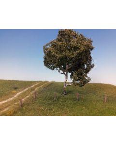 Løvtrær, , MIN210-12