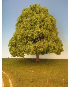Løvtrær, Lind, 30 - 40 cm , MIN342-32